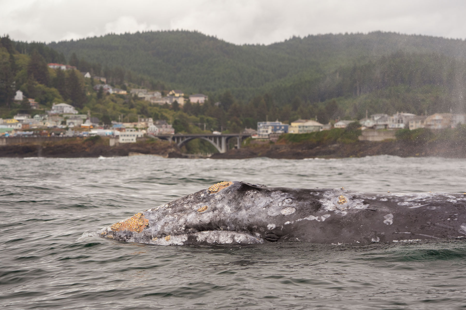 190920_whales_031